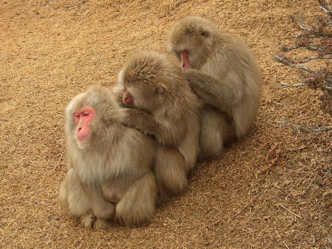 JHance_DonorsCorporations_Macaques