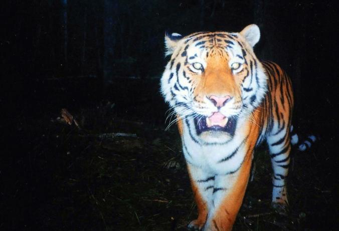 tiger-t27_2009