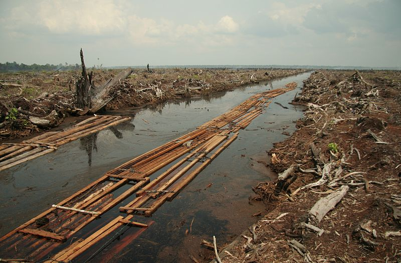 THE GUARDIAN – We know how to reduce deforestation – so where's the money?