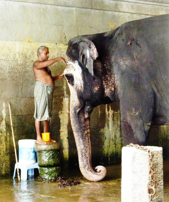 Bathtime_at_temple_in_Kanchipuram,_Tamil_Nadu