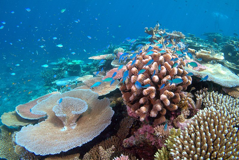 THE GUARDIAN –Could biodiversity destruction lead to a global tipping point?