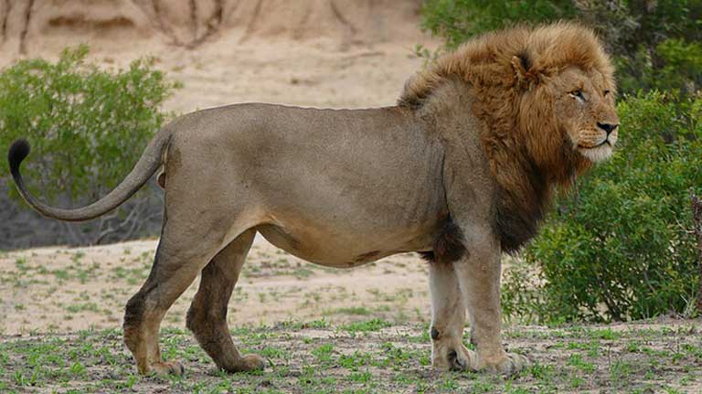 MONGABAY – Trump's elephant, lion trophy hunting policy hit with double lawsuits