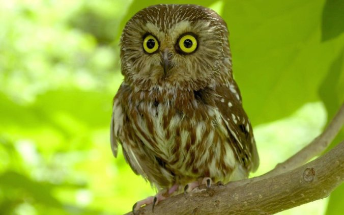 scared-owl-wallpaper-pictures-photos-in-best-quality