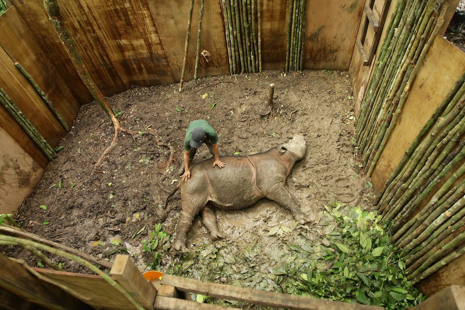 MONGABAY –A herd of dead rhinos