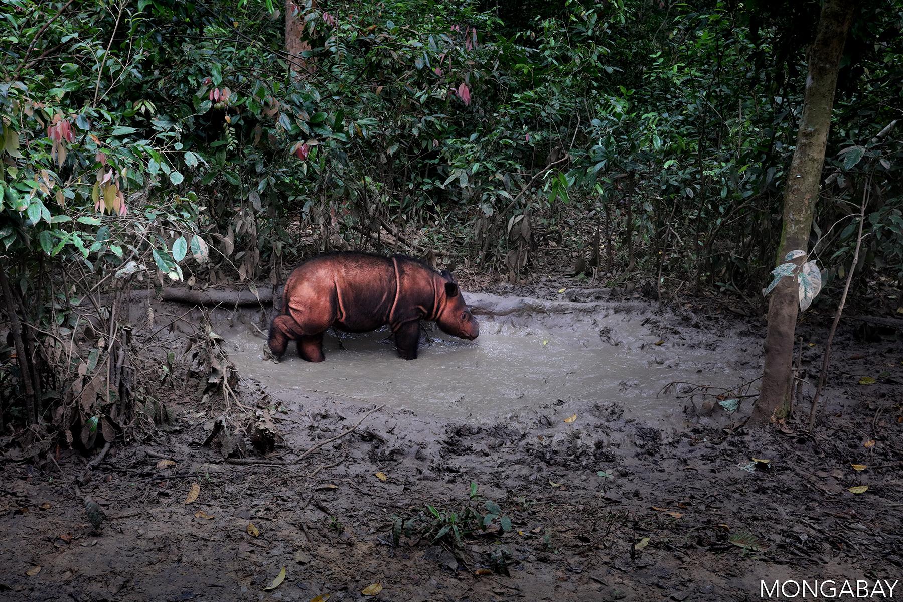 MONGABAY –The rhino reckoning