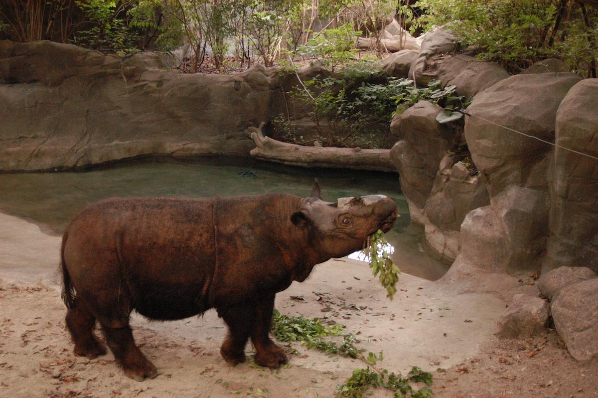 MONGABAY – The great rhino U-turn
