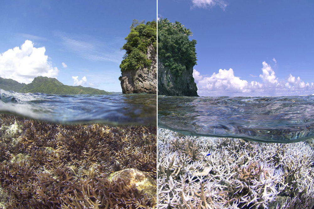 ALERT: Commotion in the Ocean: What's Happening to our Seas?