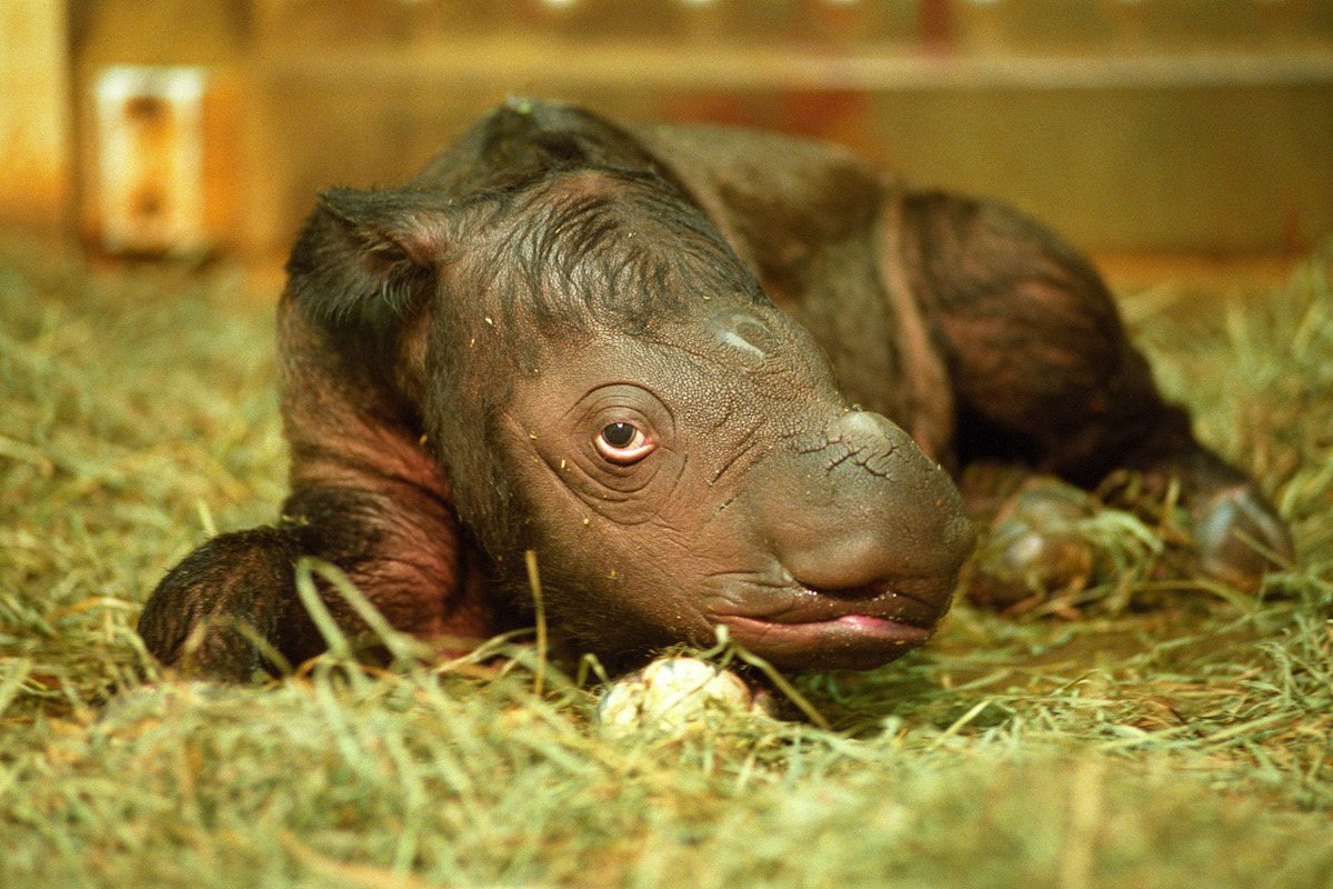 The Great Rhino U-Turn wins spot in prestigious anthology