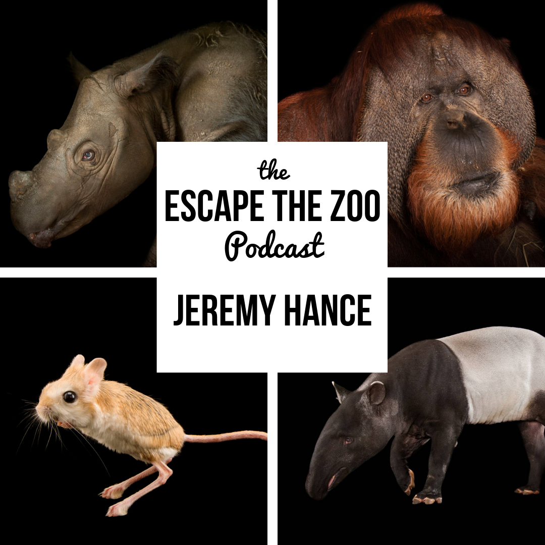 PODCAST – Escape the Zoo 2