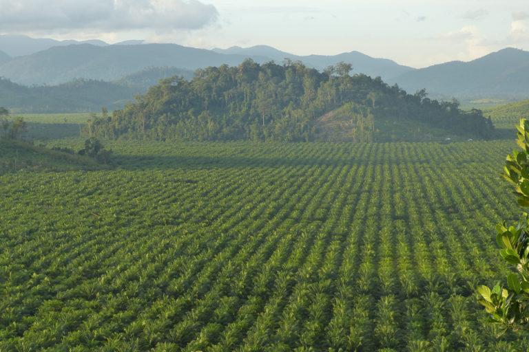 Mongabay –Less rainforest, less rain: A cautionary tale from Borneo